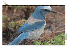 Scrub Jay Framed In Green Carry-all Pouch