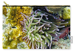 Carry-all Pouch featuring the photograph Sea Anemone And Squirrelfish by Perla Copernik