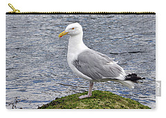 Carry-all Pouch featuring the photograph Seagull Posing by Glenn Gordon