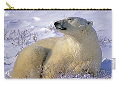 Sleepy Polar Bear Carry-all Pouch by Tony Beck