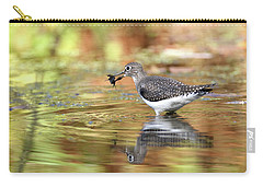 Solitary Sandpiper With Belostomatide Carry-all Pouch
