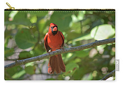 Spring Training Cardinal Carry-all Pouch