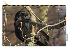 Carry-all Pouch featuring the photograph Springtime Crow Square by Bill Wakeley