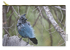 Carry-all Pouch featuring the photograph Stellar's Jay by Gary Lengyel