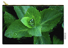 Succulent After The Rain  Carry-all Pouch