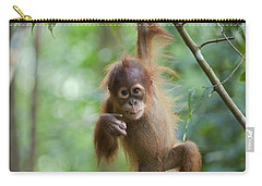Sumatran Orangutan Pongo Abelii One Carry-all Pouch by Suzi Eszterhas