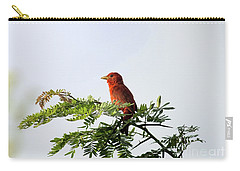 Summer Tanager In Mesquite Scrub Carry-all Pouch by Robert Frederick