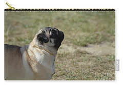 Sweet Face Of A Pug Dog Carry-all Pouch by DejaVu Designs