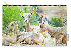 Three Big Horn Sheep Carry-all Pouch