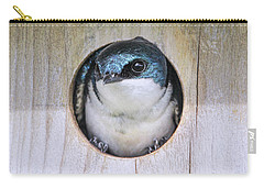 Carry-all Pouch featuring the photograph Tree Swallow In Nest Box by Jennie Marie Schell