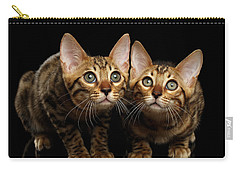Two Bengal Kitty Looking In Camera On Black Carry-all Pouch by Sergey Taran