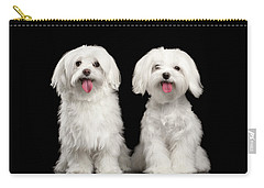 Two Happy White Maltese Dogs Sitting, Looking In Camera Isolated Carry-all Pouch