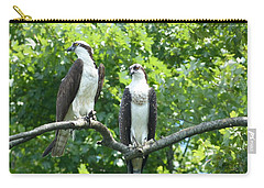 Carry-all Pouch featuring the photograph Two On A Limb - Osprey by Donald C Morgan