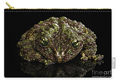 Vietnamese Mossy Frog, Theloderma Corticale Or Tonkin Bug-eyed Frog, Isolated On Black Background Carry-all Pouch by Sergey Taran