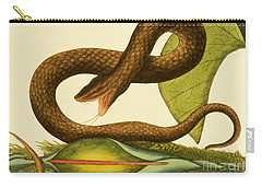 Viper Fusca Carry-all Pouch by Mark Catesby