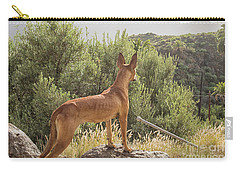 Watchful Dog Carry-all Pouch by Patricia Hofmeester