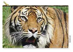 Carry-all Pouch featuring the photograph Whiskers  by Steve Taylor