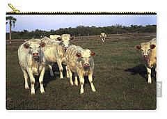 Carry-all Pouch featuring the photograph White Cows by Sally Weigand