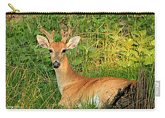 White-tail Buck Resting Carry-all Pouch
