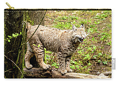 Wild Bobcat In Mountain Setting Carry-all Pouch by Teri Virbickis