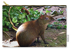 Carry-all Pouch featuring the photograph Wild Rodent  by Francesca Mackenney