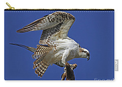 Yearling Osprey Carry-all Pouch