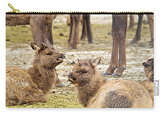 Carry-all Pouch featuring the photograph Yearlings by Jeff Swan