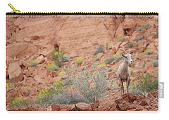 Carry-all Pouch featuring the photograph Young Big Horn Sheep  by Patricia Davidson