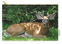 Young Buck Lying In The Shade Carry-all Pouch