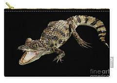 Young Cayman Crocodile, Reptile With Opened Mouth And Waved Tail Isolated On Black Background In Top Carry-all Pouch by Sergey Taran