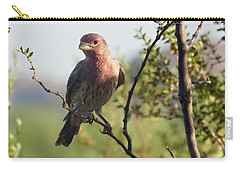 Young Male House Finch Carry-all Pouch
