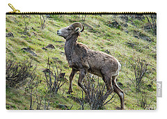 Carry-all Pouch featuring the photograph Young Ram Climbing by Mike Dawson