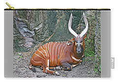 Carry-all Pouch featuring the photograph Bongo by PJ Boylan