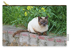 Carry-all Pouch featuring the photograph Cat On A Wall by PJ Boylan