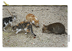 Carry-all Pouch featuring the photograph Four Foraging Felines by PJ Boylan