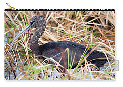 Carry-all Pouch featuring the photograph Glossy Ibis 123015 by Rick Veldman