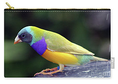 Carry-all Pouch featuring the photograph Gouldian Finch?  by PJ Boylan