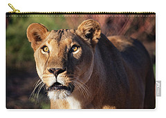 Lioness Looking Up Carry-all Pouch