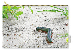 Carry-all Pouch featuring the photograph Millipede-namibia by PJ Boylan
