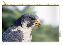 Carry-all Pouch featuring the photograph Peregrine Falcon by Rick Veldman