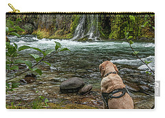 Carry-all Pouch featuring the photograph Photo Dog Jackson Contemplating His Next Photograph  by Matthew Irvin