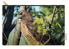 Carry-all Pouch featuring the photograph Red-tailed Hawk Looking Down From Tree by Rick Veldman