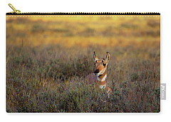 Carry-all Pouch featuring the photograph Sunset Pronghorn by Pete Federico