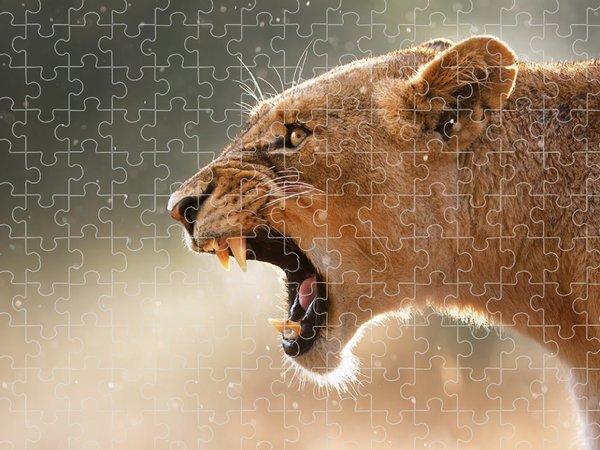 Panthera Puzzles