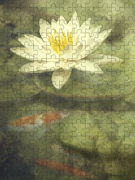 Lily Puzzles