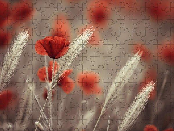 Poppy Jigsaw Puzzles