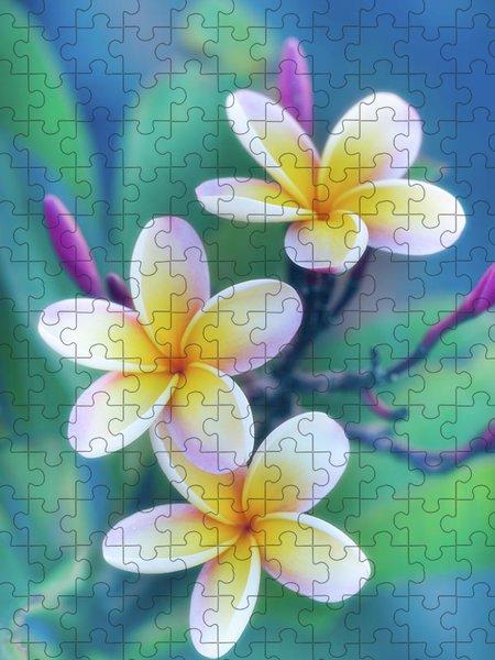 Frangipani Jigsaw Puzzles