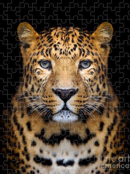 Black Puzzles