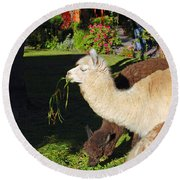 Alpacas Round Beach Towel by Eva Kaufman