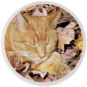 Round Beach Towel featuring the photograph  Autumn Dreaming by Susan Leggett